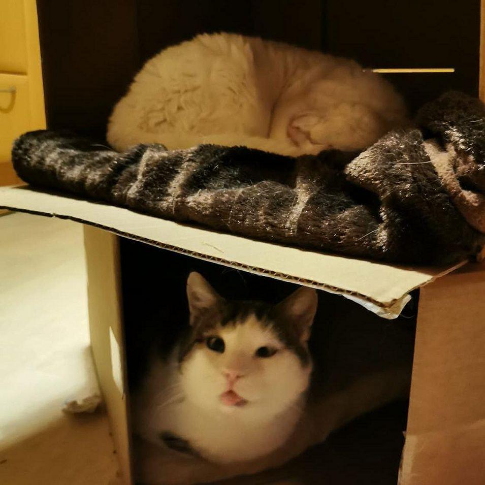 Foto von Susanne; Katze