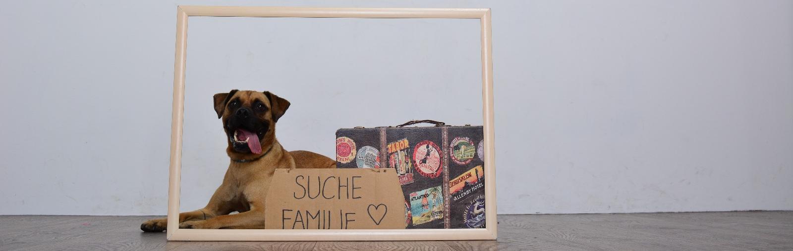 Hund Marley sucht eine Familie