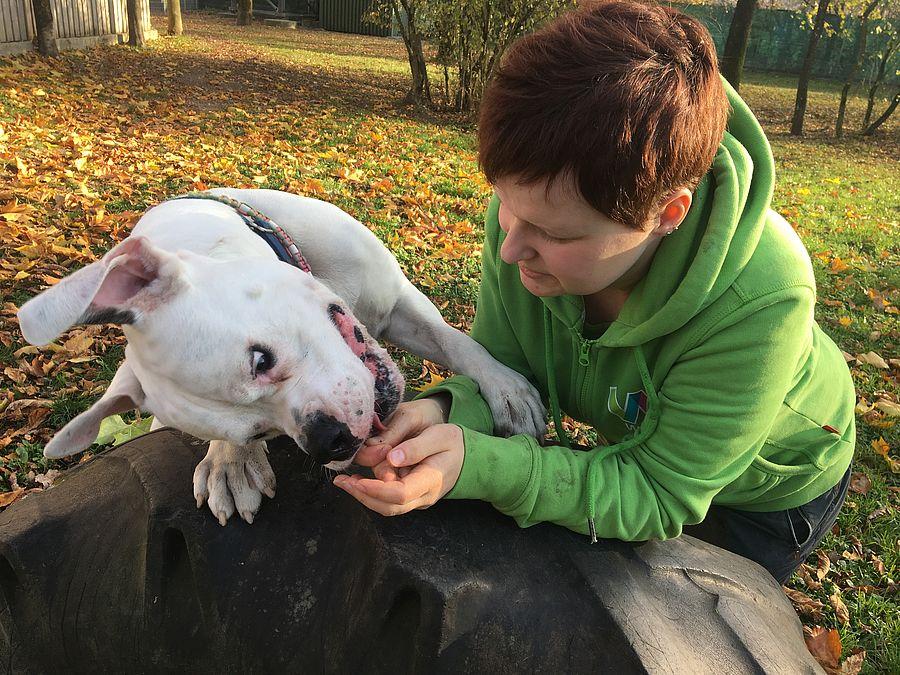 Frau bei einer ehrenamtliche Tätigkeit mit Hund Patricia