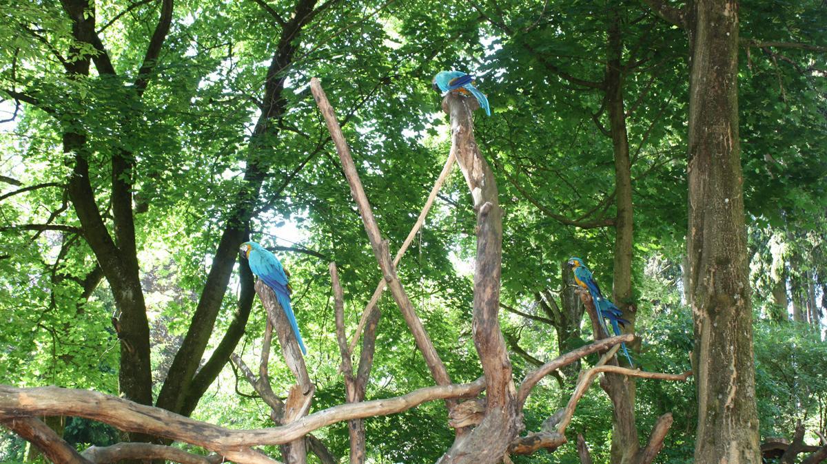 blaue Papageien im Tiergarten Wels
