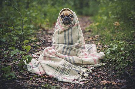Hund mit einer Decke im Freien