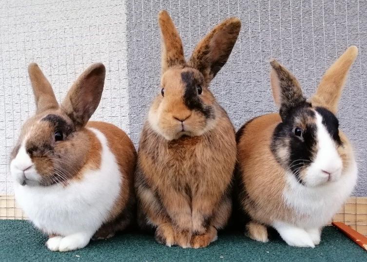 Foto von Alex, Klaus und Elli; Kaninchen
