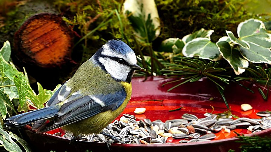 Vogel plus Futter