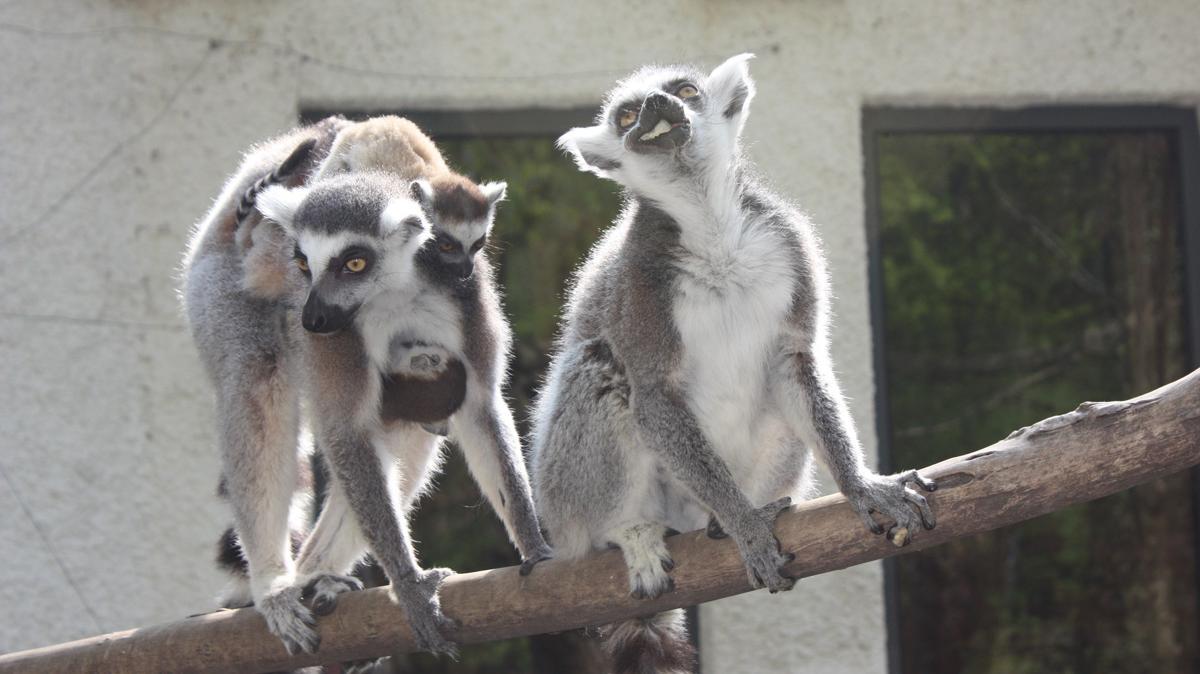 Katas im Tiergarten Wels