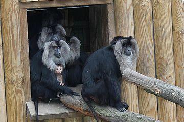 Tiergarten Bartaffen