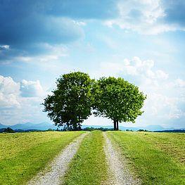 Landschaftsbild mit zwei Laubbäumen