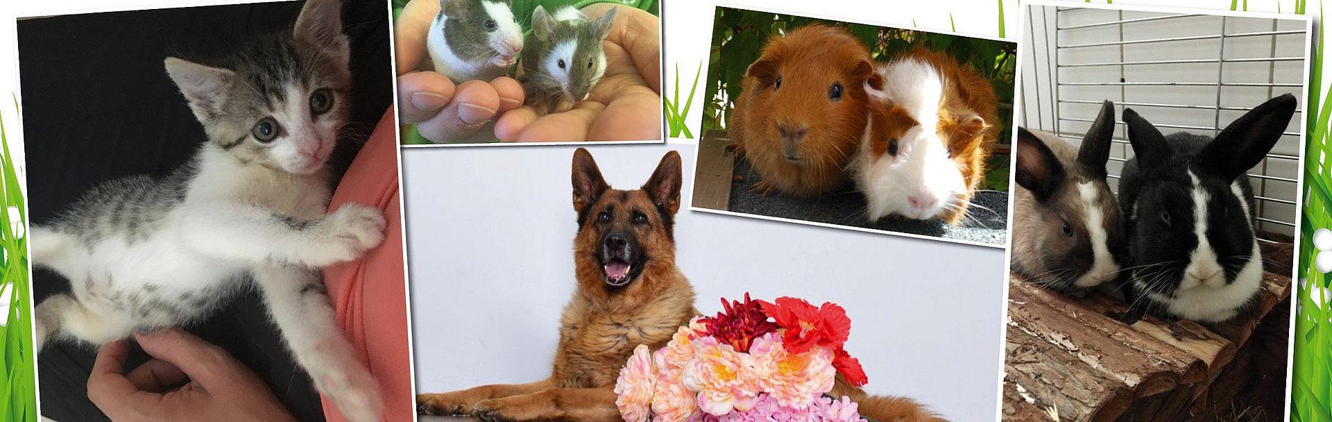 Banner mit Tieren für private Vergabe von Haustieren