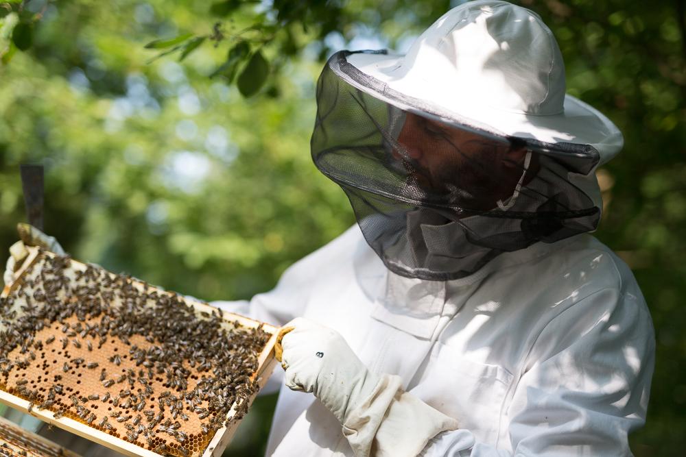 Imker mit Bienenvolk