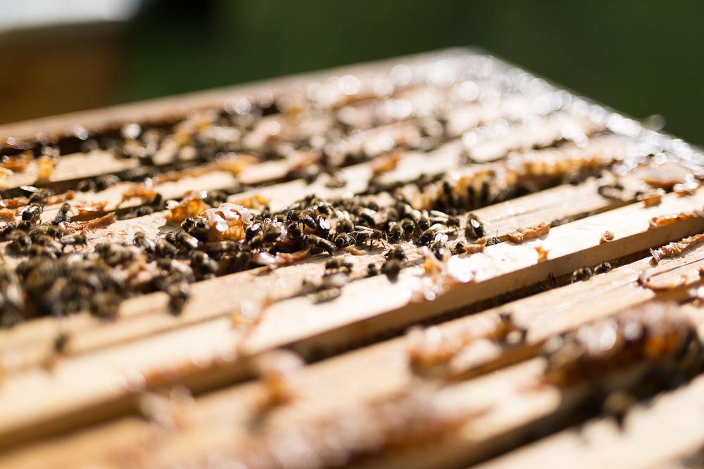 Bienenvolk auf Bienenstock